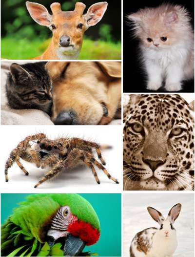 250 Animals Wallpapers (2012)Full HD